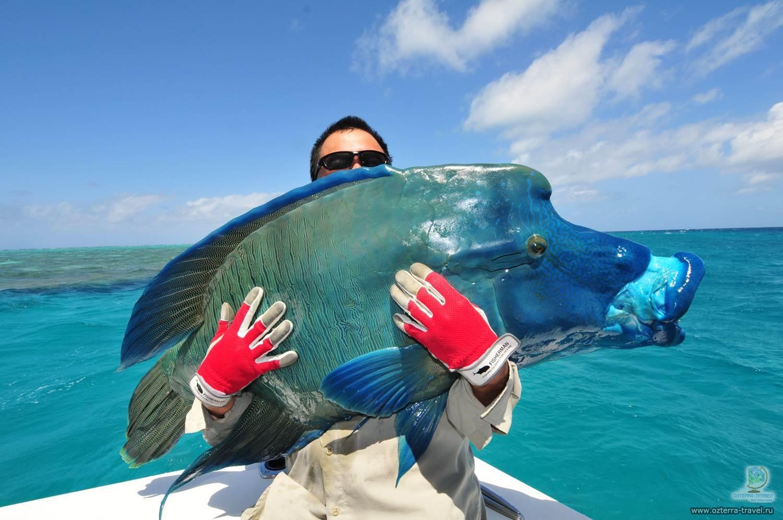 коралловый рыбак