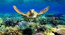 avstralija_i_okeanija